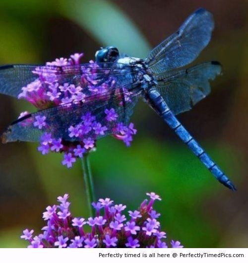 a-beautiful-Dragonfly-resizecrop--